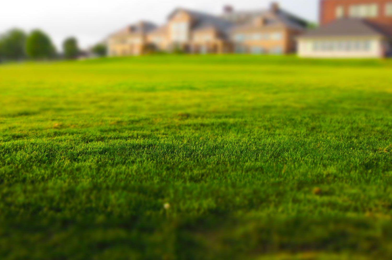توريد وتركيب عشب طبيعي العين
