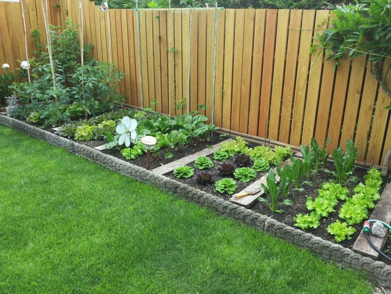 توريد و تركيب عشب طبيعي الشارقة